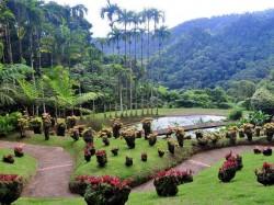 3. Фор-де-Франс - ботанический сад Балата