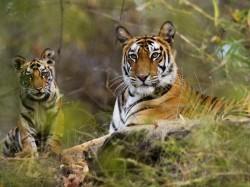 3. Керала (Индия) - тигриный заповедник Перияр