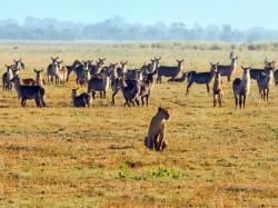 Мозамбик -  Природа
