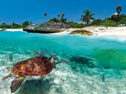 2. Антигуа и Барбуда - морская черепаха