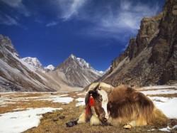 1. Бутан - Гималаи
