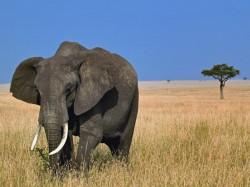 1. Гамбия - слон
