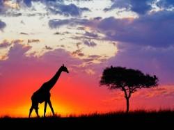 1. Гамбия - удивительная саванна