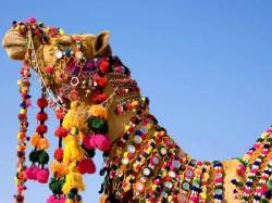 1. Катар - верблюд