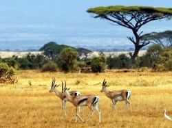 Ботсвана -  Национальный прак