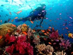 1. Бермудские острова - дайвинг