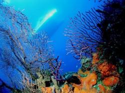 4. Теркс и Кайкос - коралловые рифы