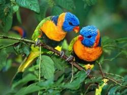Сан-Томе и Принсипи -  Попугаи