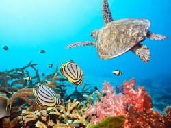 1. Тайланд - подводный мир