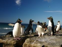2. Аргентина - пингвины в Пунта Томбо