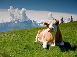 Лихтенштейн - Природа