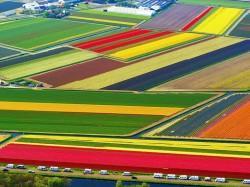 1. Нидерланды - Тюльпановые поля