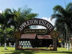 1. Ямайка - Эпплтон