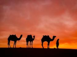 1. Бахрейн - катание на верблюдах