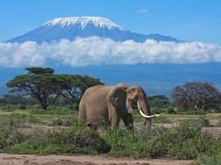 1. Танзания - вулкан Килиманджаро