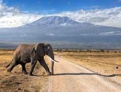 2. Национальный парк Амбосели (Кения)