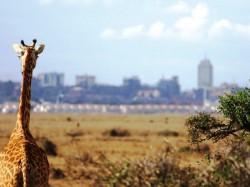 1. Национальный парк Найроби (Кения)