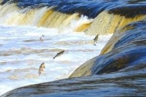 В Кулдиге летает рыба