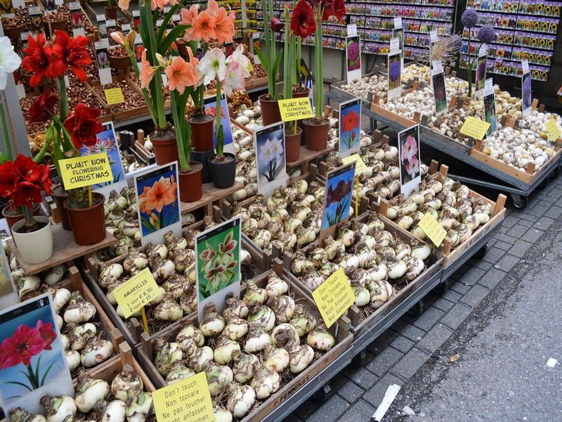 Оптовые рынки цветов адреса, цветы для